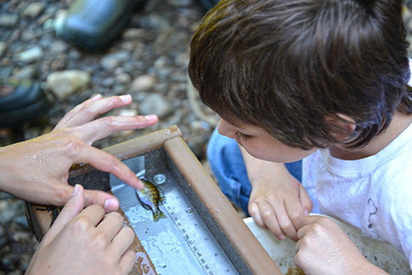 Nine-year-old Geo assists in measuring a bluegill.