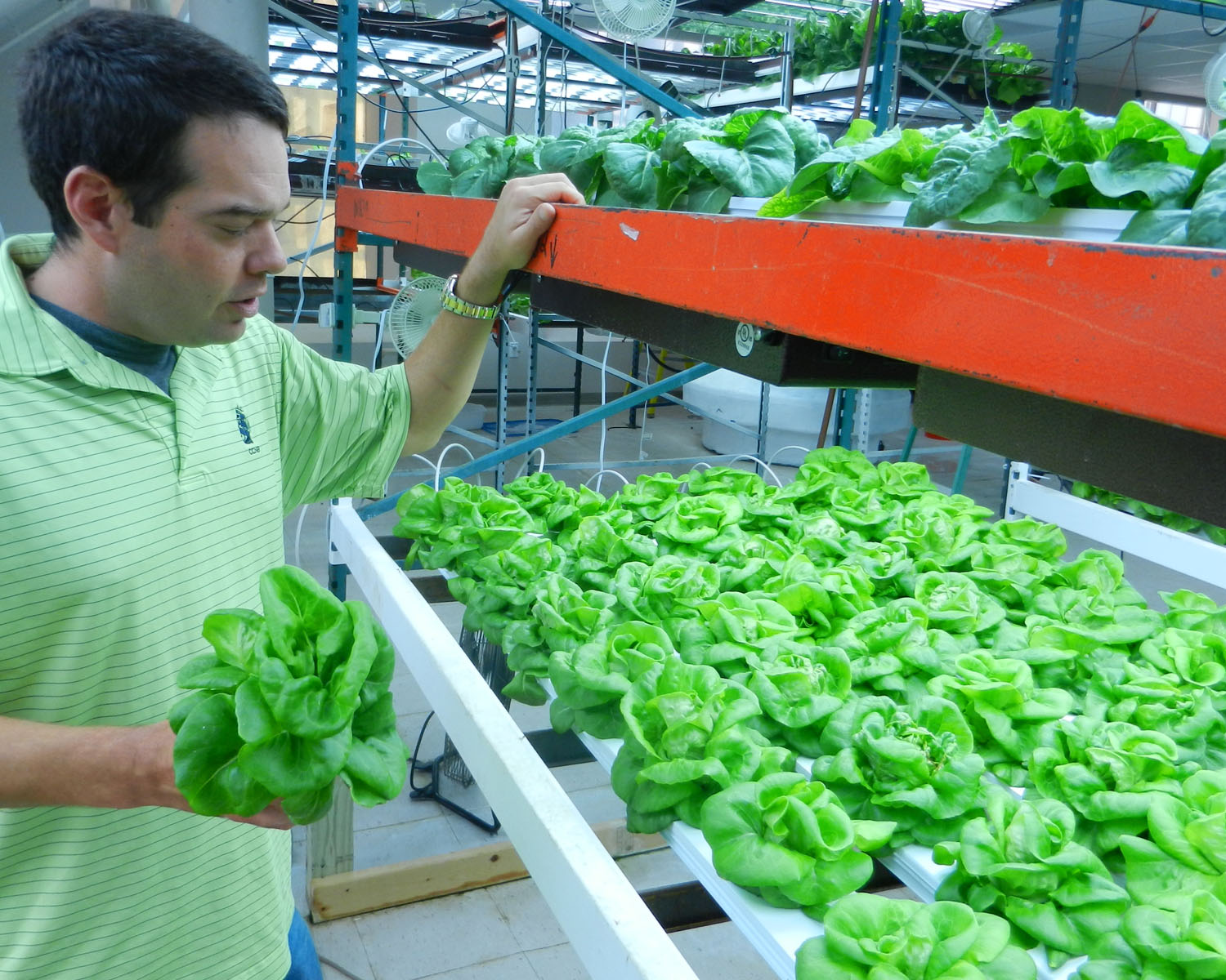 S&S's Urban Acres is selling produce to Whole Foods and the Farm Fresh Market Mobile. Brad Dean runs the farm in a Fall River textile mill. (Tim Faulkner/ecoRI News)