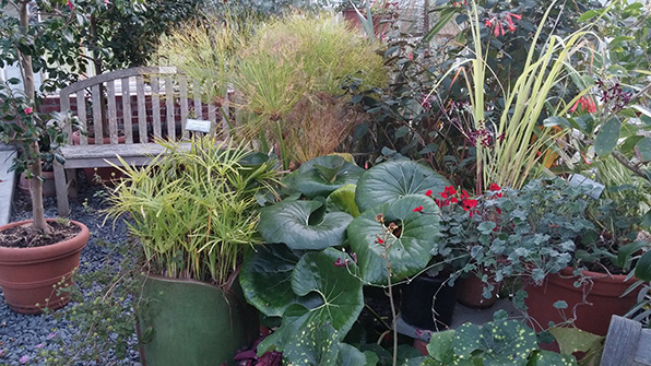 Gardening at Blithewold is a year-round undertaking.