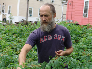 Is there enough land in New England to feed 50 percent of the population? Rich Pederson grows about 2 tons of food annually on three-quarters of an acre in Providence. (Frank Carini/ecoRI News)