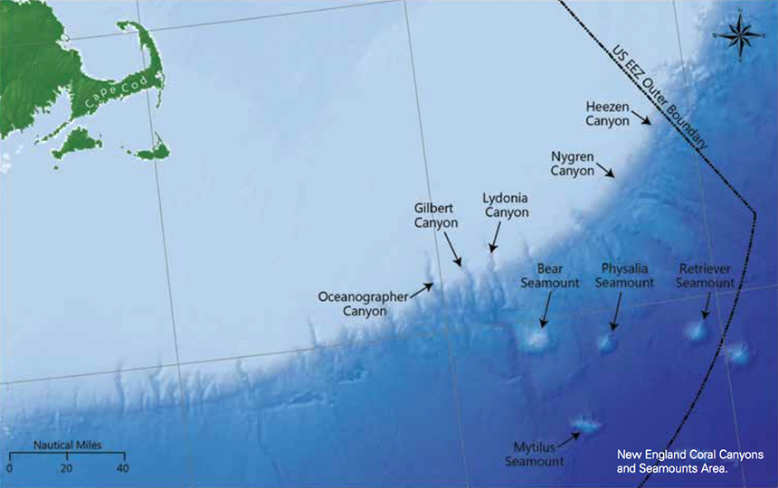 Deep-sea canyons, which can plunge to depths greater than 7,000 feet, and seamounts, which rise thousands of feet above the sea floor, create habitats that are home to corals, fish, marine mammals and turtles. (CLF/NRDC)