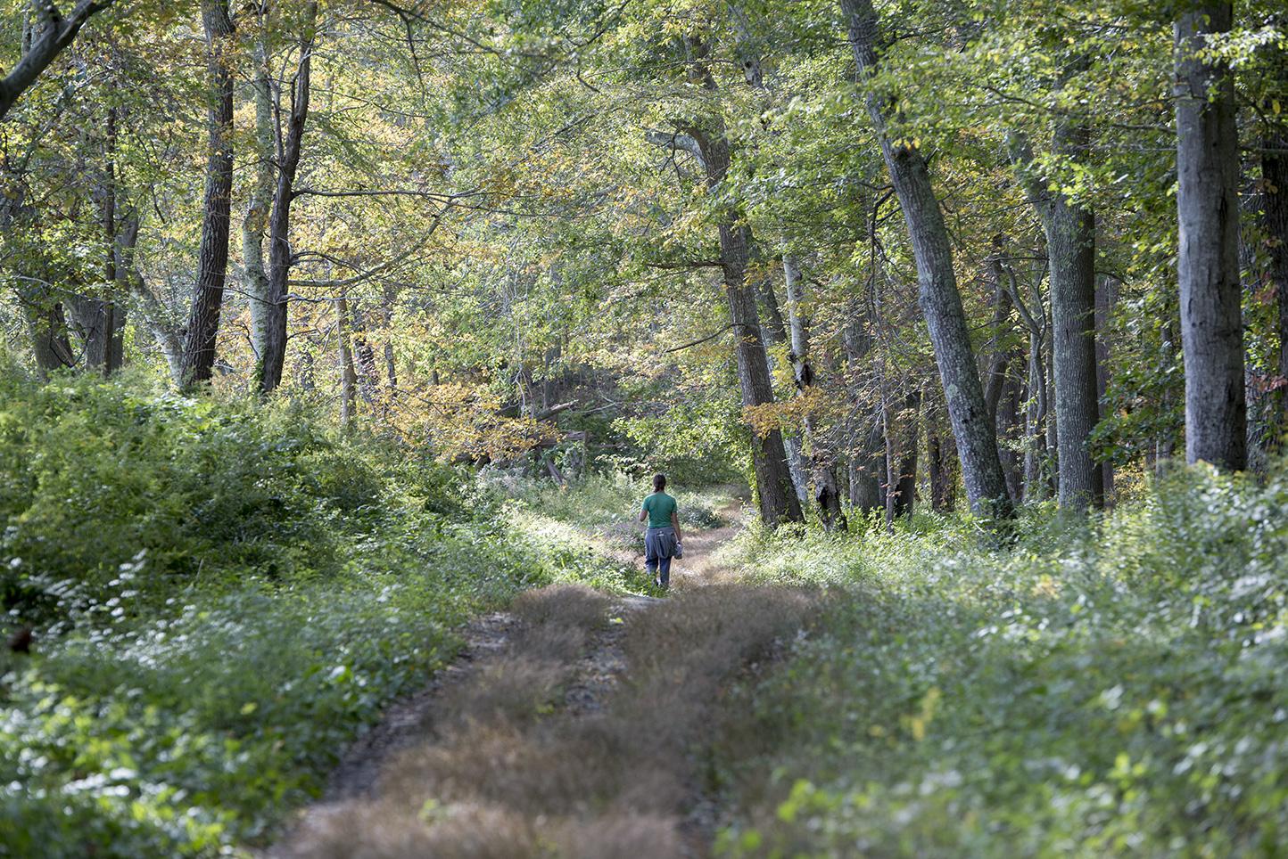 Weekend Trail Blazers