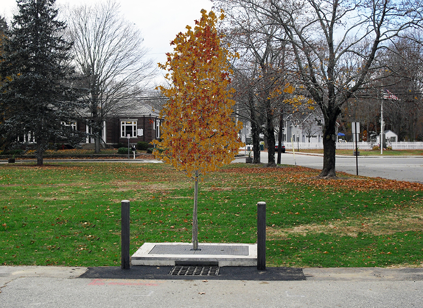 StormTree designs and installs stormwater management systems that use common street trees and engineered soil to absorb and treat stormwater. (StormTree)