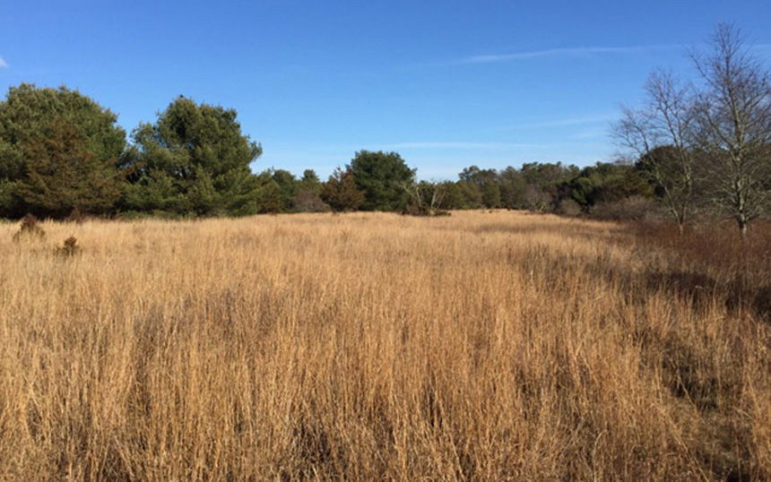 The site of a former nuclear facility in southwestern Rhode Island is now part of a 1,100-acre nature preserve that includes grassland habitat for songbirds. (The Nature Conservancy)