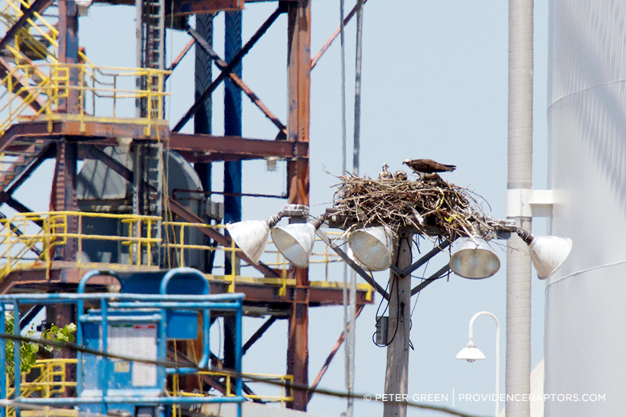 In 2015, 38 percent of osprey nests were located on manmade structures not designed for that purpose, like this one at the Port of Providence. Another 40 percent were on osprey platforms and 22 percent were in natural settings. (Peter Green/Providence Raptors)