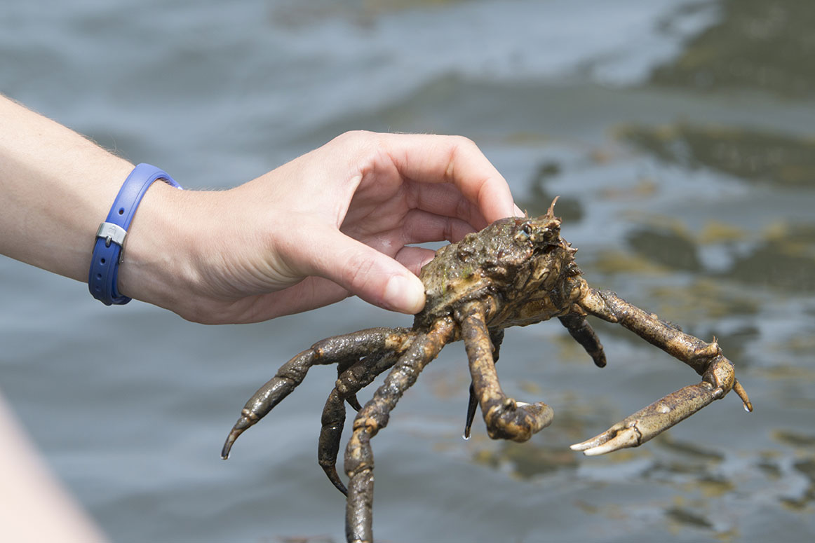 Clams and Spiders