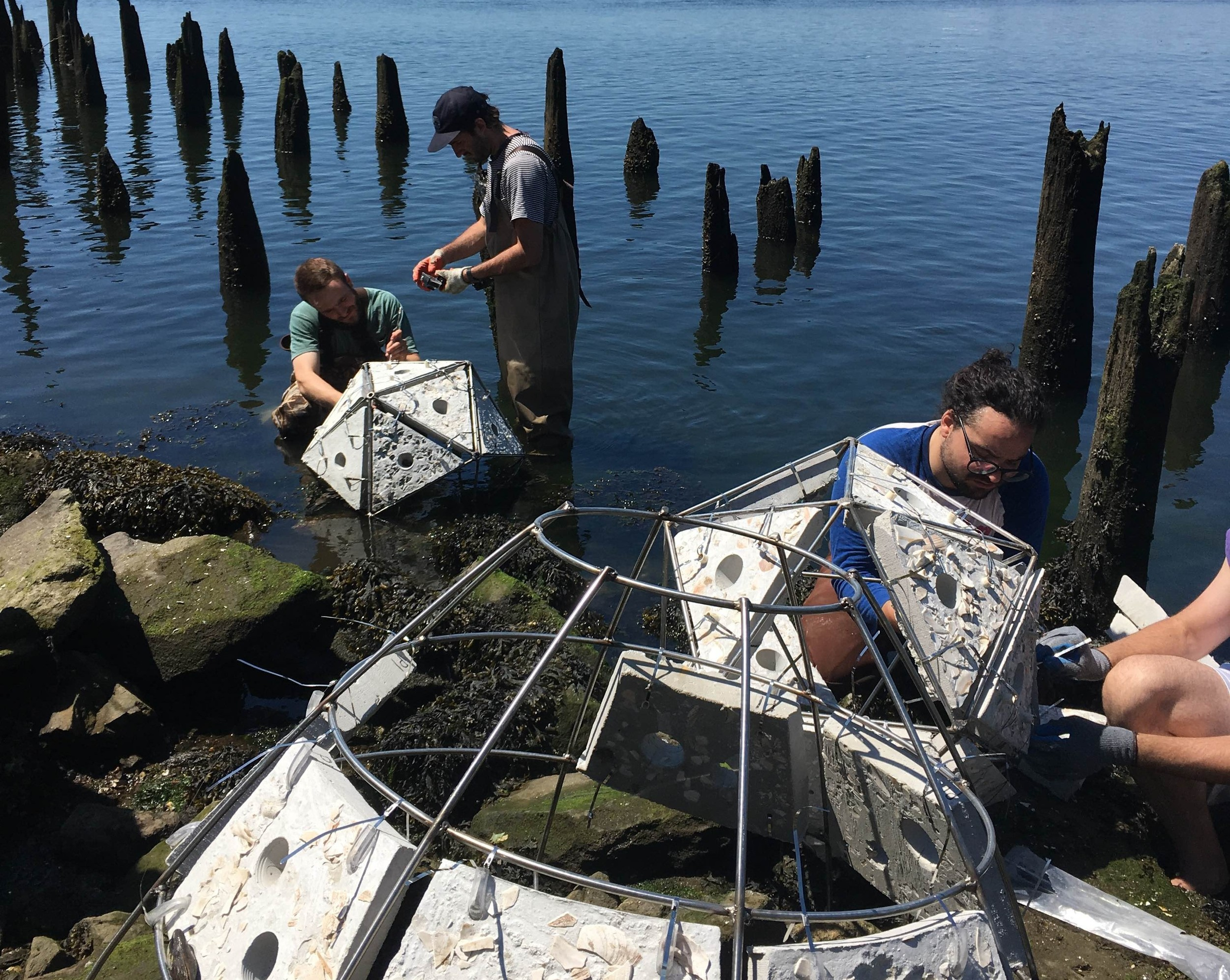 Shellfish reefs have been installed along the shoreline of India Point Park. The nine reefs are only visible at low tide.(RISD photos)