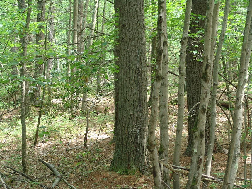 The location of the proposed Burrillville, R.I., fossil-fuel power plant is situated among some 16,000 acres of protected forestland in three states. (Frank Carini/ecoRI News)