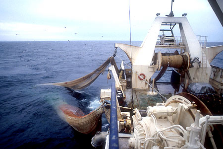 Haddock is the largest component of bycatch by midwater trawling vessels, according to the NEFMC.