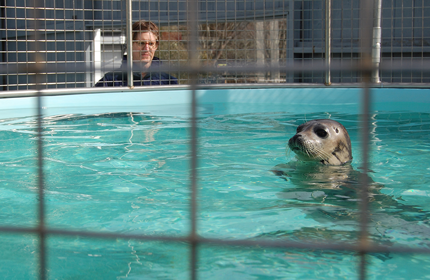 The Seal Rescue Clinic keeps round-the-clock watch on recovering animals. (Mystic Aquarium)
