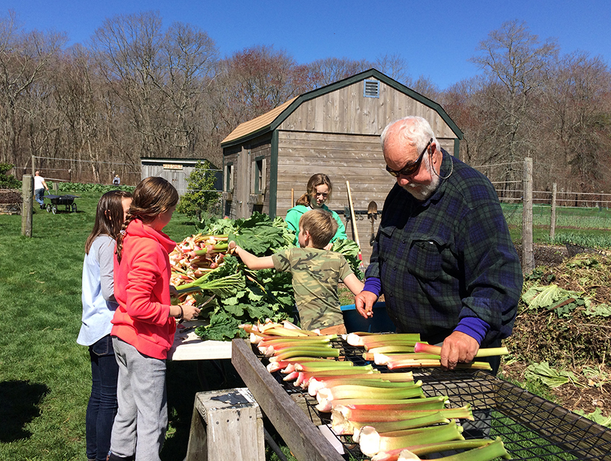 Mike Merner, right, began growing rhubarb on Earth Care Farm in 1977. He started with two plants given to him by a friend. Now, there are rows of rhubarb and it takes a family to harvest all of it. (Jayne Merner Senecal)