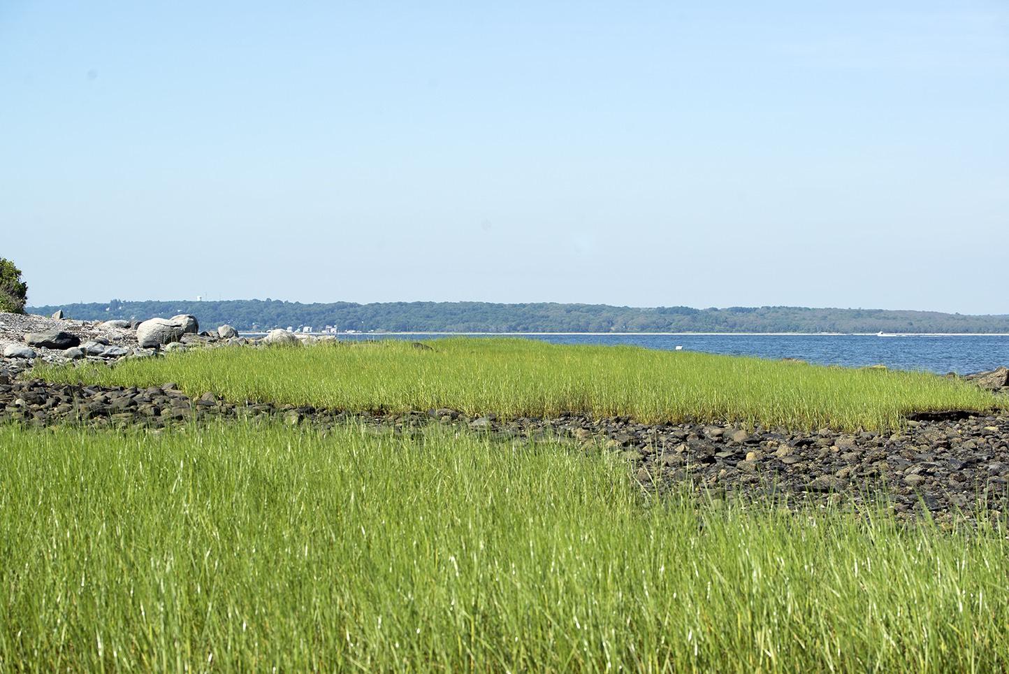 The Jamestown shoreline on Narragansett Bay. (Joanna Detz/ecoRI News)