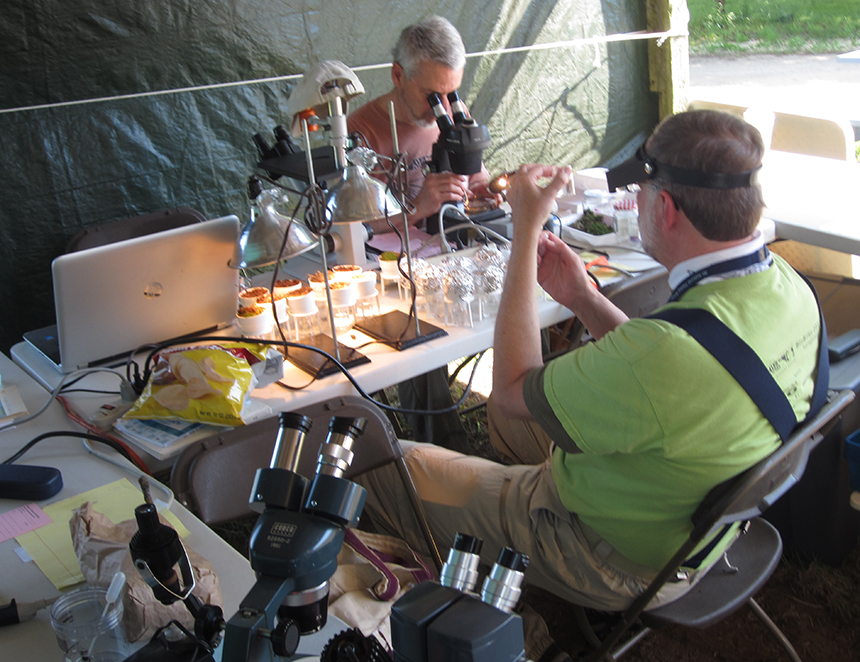 One group of Rhode Island BioBlitzvolunteers refers to themselves as the 'Litter Bugs.' They scoop up small quantities of soil and leaves and sort through it until they find living creatures, which they then identify under a microscope. (Todd McLeish/ecoRI News)