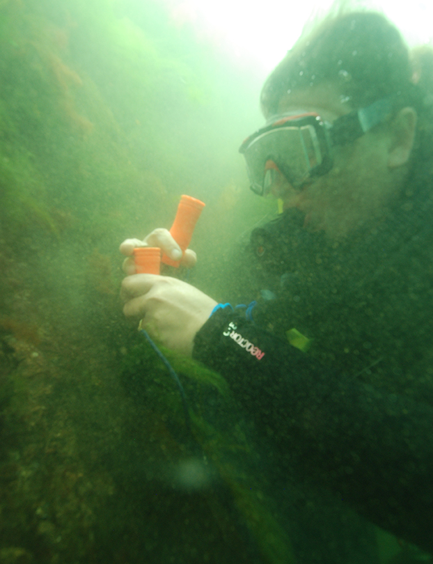 Randi Rotjan collecting some northern star coral off the Jamestown shore. (Michael Lombardi/Ocean Opportunity)
