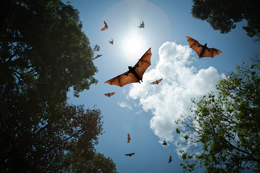 Wind turbine owners have reported dead bats at the base of their structures. (istock)