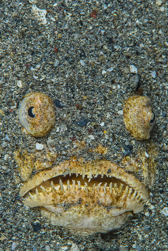 Two-thirds of all animals on the planet live on or in seafloor sediments. (istock)