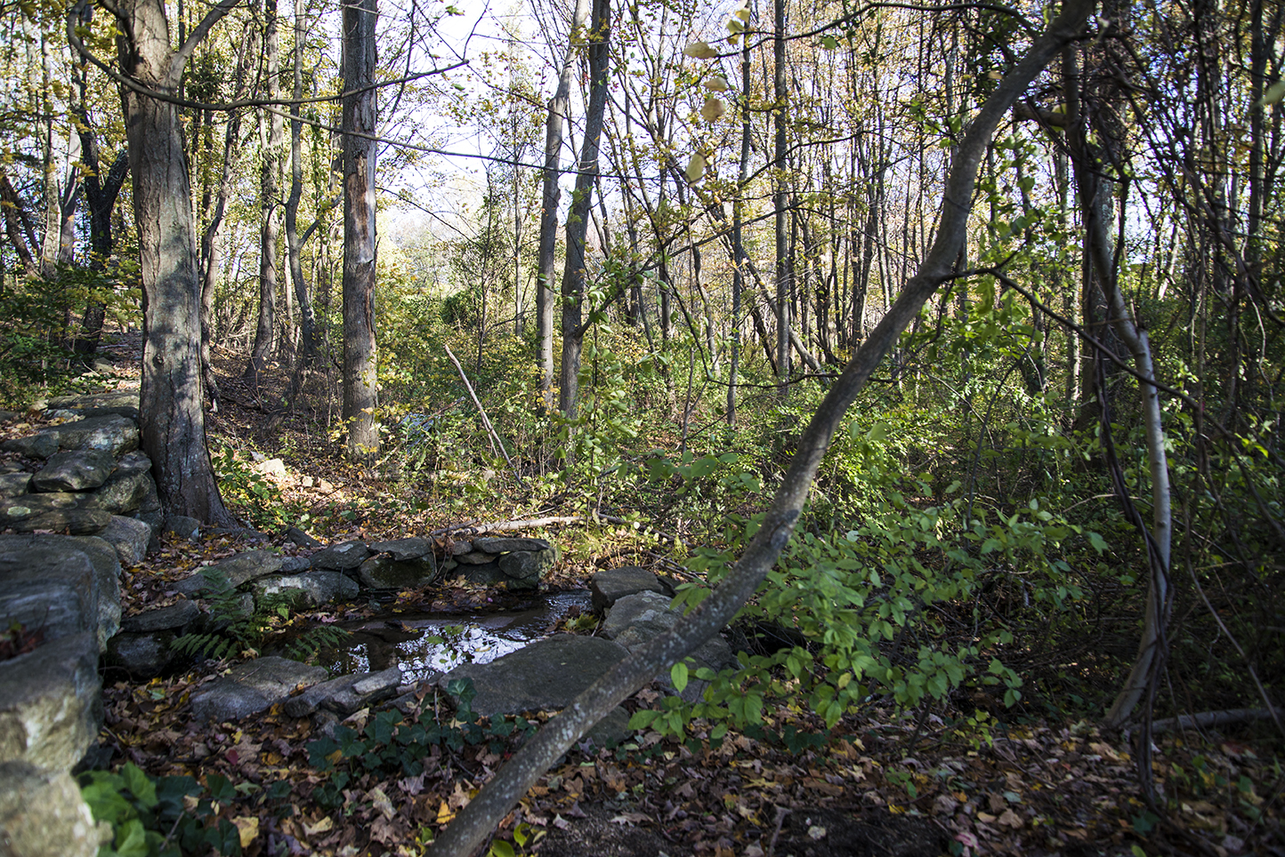 Neighbors are concerned the development of this wooded lot on Wilbur Road will alter wetlands and disturb a brook. (Joanna Detz/ecoRI News)