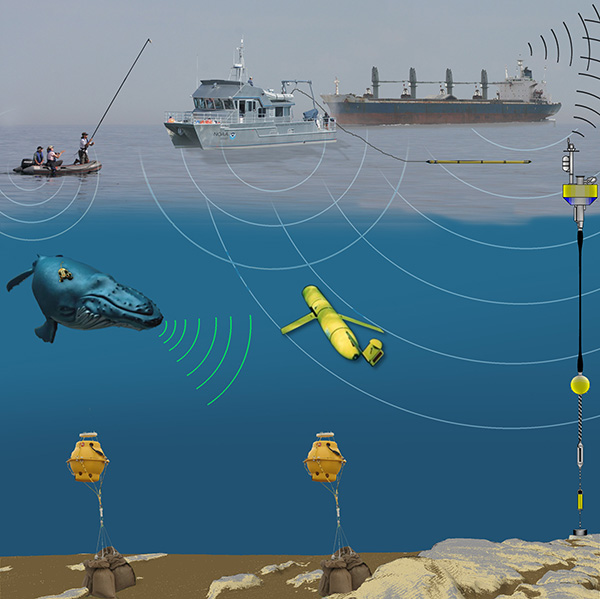 This graphic shows the various technologies used to study marine mammal acoustics. (Mike Thompson/NOAA)