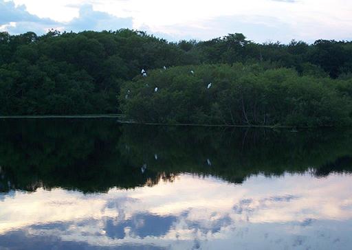 Egrets at dusk at Gray's Mill Pond in the village Adamsville. (Abigail Brooks)