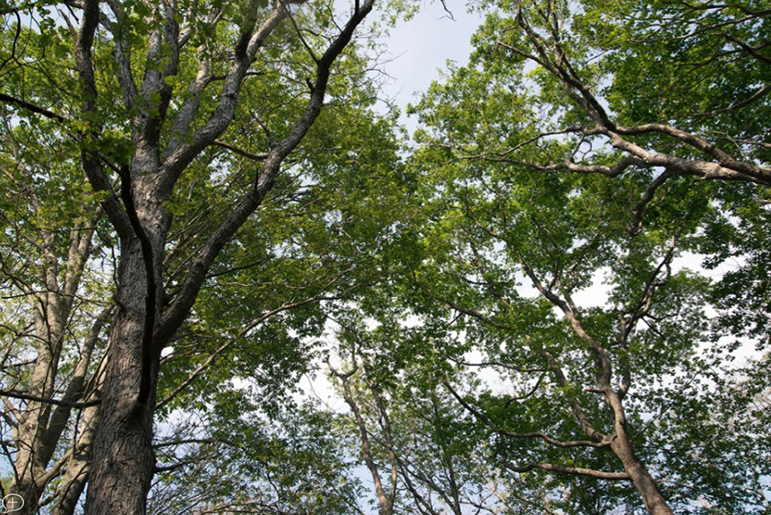 Forests, like this one that covers Dundery Brook Trail in Little Compton, R.I., play a significant role in Rhode Island's economy. (ecoRI News)