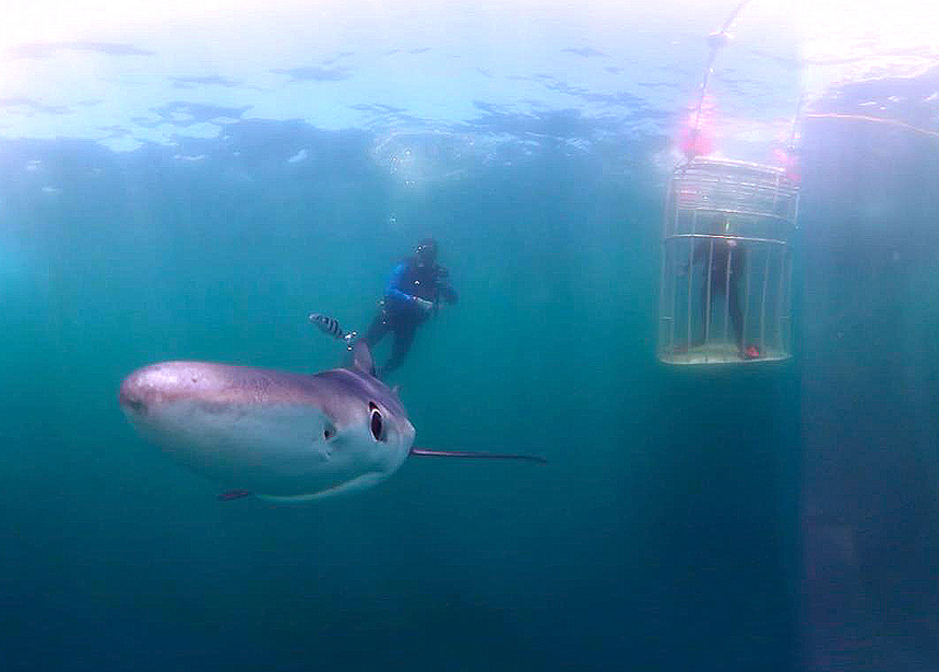 An experimental 'selfie' using a wide-angle virtual-reality camera. The sharks ended up biting at the camera, so its use was aborted.