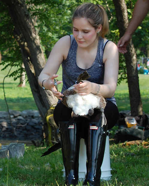 Volunteer Alexis McCabe learned Canada geese are stronger than they look. (Todd McLeish/ecoRI News photos)