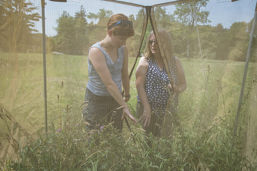 Recent graduate and student worker Courtney Graham, left, and URI's Biocontrol Lab manager Lisa Tewksbury visit field sites and test the effectiveness of the Hypena opulenta's ability to control invasive swallow-wort plants. (Nora Lewis photos)