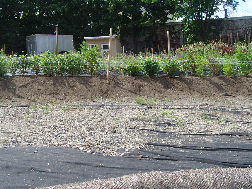 It took plenty of work to build the farm's first flower bed. It's not easy to remediate a brownfield. (Frank Carini/ecoRI News)