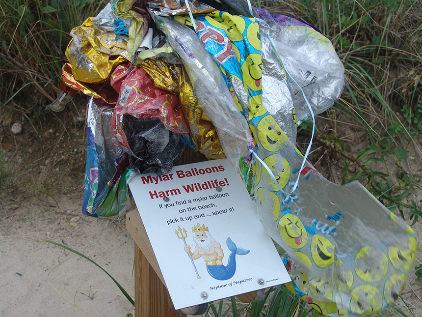This collection spike has lessened the environmental damage Mylar balloons were causing on Napatree Point.