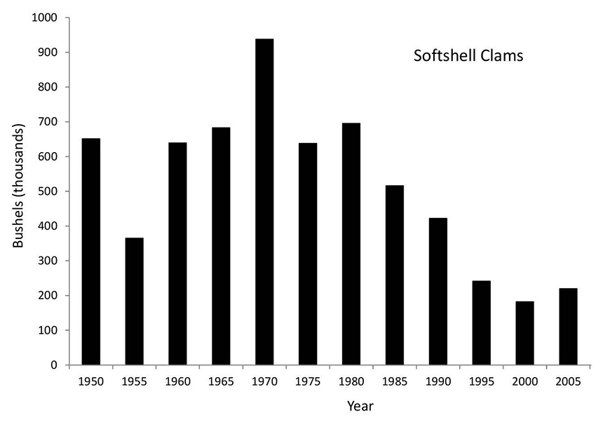This graph shows the rise and fall of soft-shell clam landings from 1950 to 2005. (Clyde Mackenzie)