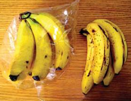 Keith Christman's pro-plastics presentation featured this picture with the caption: 'Bunches of identical bananas stored for 7 days loose and in a modified atmosphere bag.'