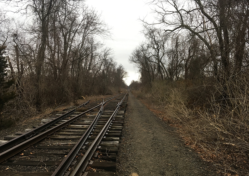 This photo was taken three months after the Newport & Narragansett Bay Railroad Co. was cited for the illegal spraying of herbicide along a stretch of track in Portsmouth, R.I. (Joanna Detz/ecoRI News)