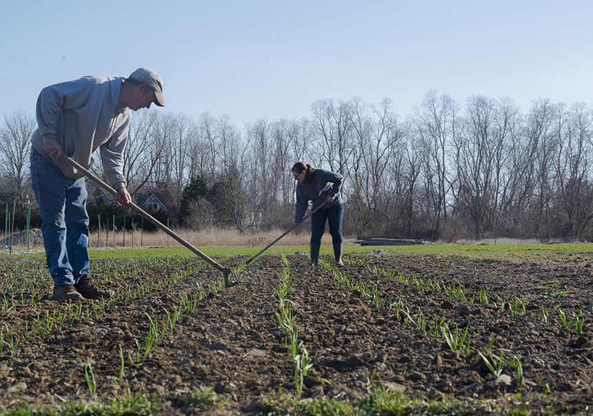 The Garmans, Jim and Michelle, have been farming leased land in Middletown, R.I., since 2011. (Joanna Detz/ecoRI News)