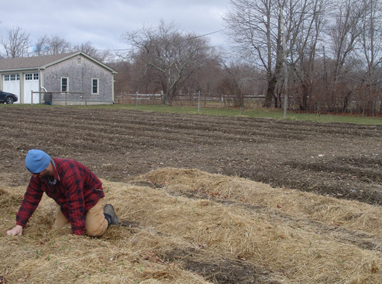 Farming work is often tedious and tiresome, just ask Andrew Smith shown here nurturing rows of garlic. (Frank Carini/ecoRI News)