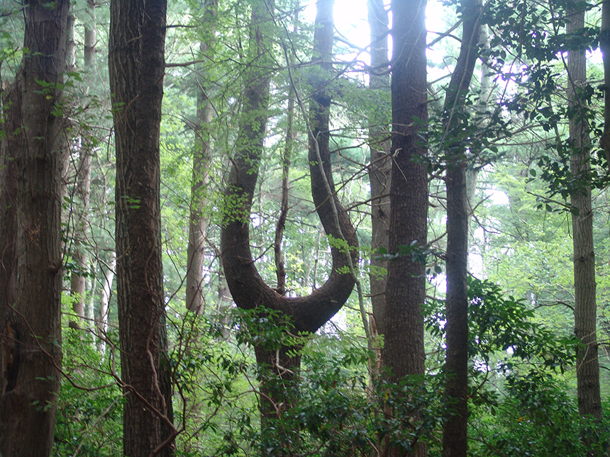 Since 2011 Rhode Island has lost some 2,000 acres in areas of environmental concern within the state's forests to development. (ecoRI News)