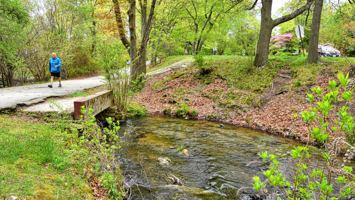 The Meshanticut stream is the lake's water source. Unfortunately, it carries pollutants from roads and nutrients from lawn fertilizers, which accelerate the growth and volume of lake plants and algae.