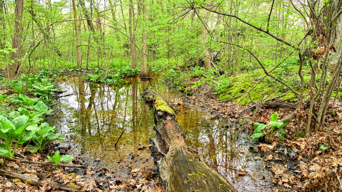 Neglect ultimately creates the conditions that challenge the lake's resiliency.