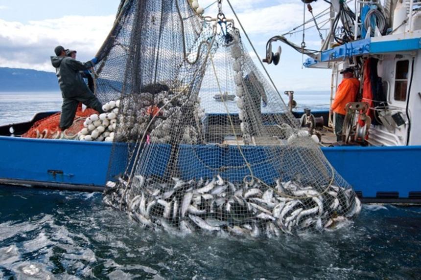 A fishing boat hauling in a net full of fish