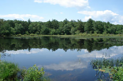 The Arcadia Management Area is Rhode Island's largest conservation area. (DEM)