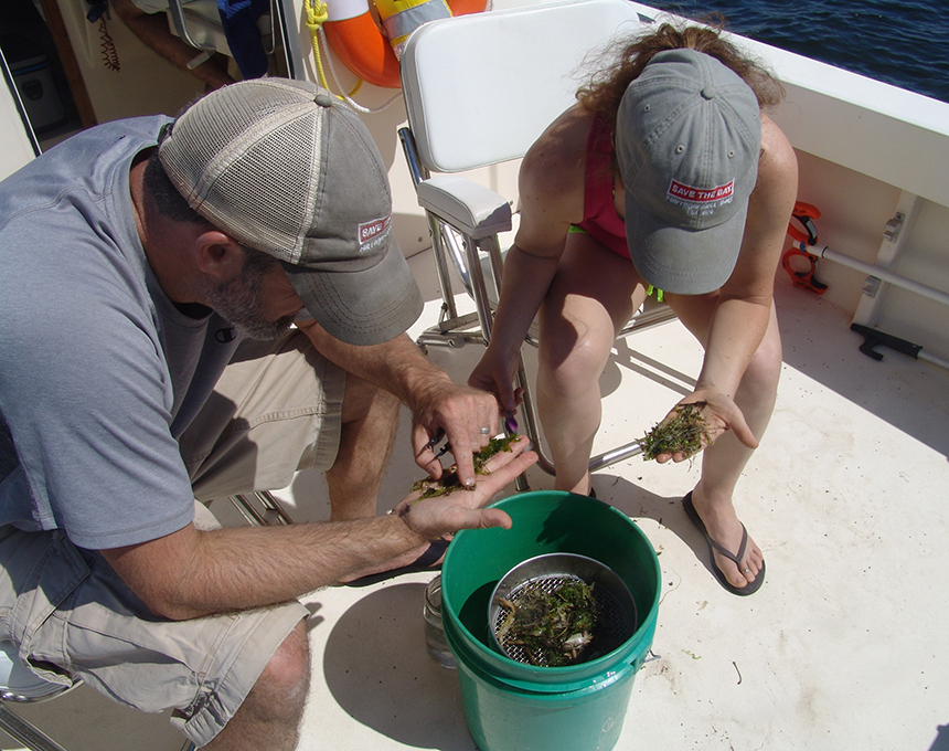 David Prescott and Kate McPherson carefully comb through a trawl looking for microplastics.