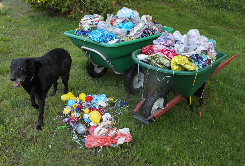 During a single day in May, Little Compton, R.I., resident Geoff Dennis collected 282 balloons on the local beaches he regularly walks. (Courtesy photo)