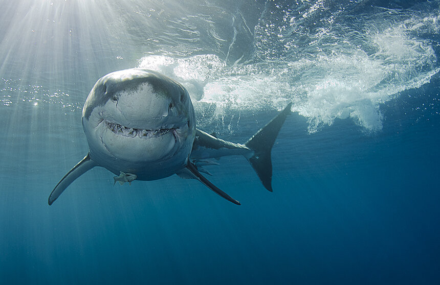 Complicated Relationships Entwined to Produce Shark Attacks