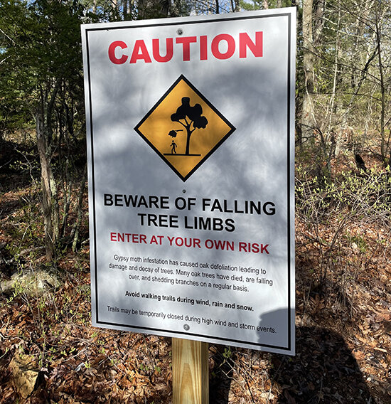 A sign at the trailhead of the Francis C. Carter Preserve warns hikers of the danger of limbs falling from dead trees. (Cynthia Drummond/for ecoRI News)