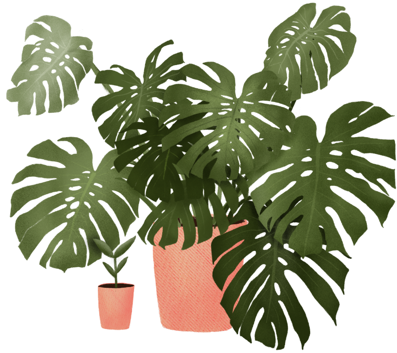 monstera header image.png