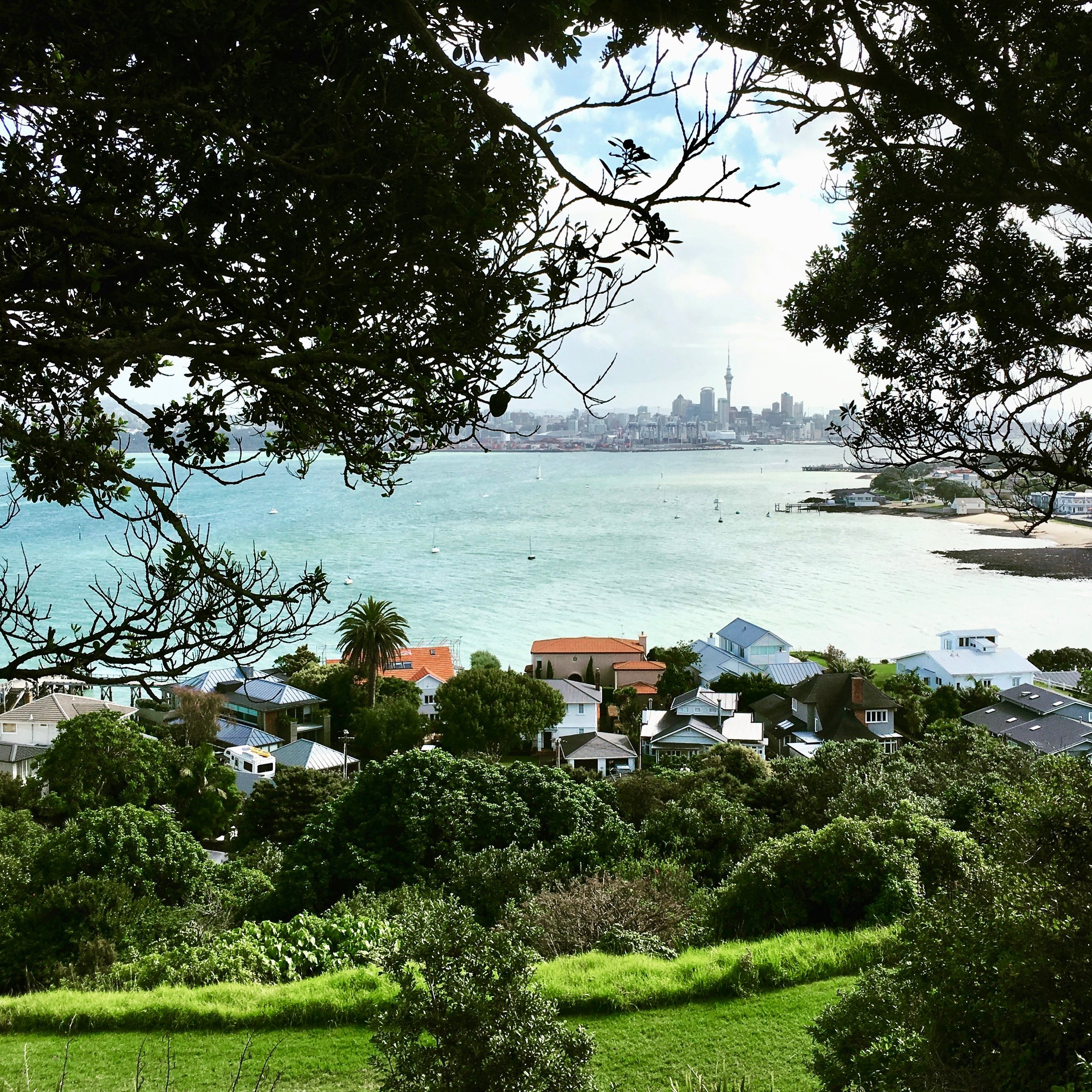 Auckland vibes