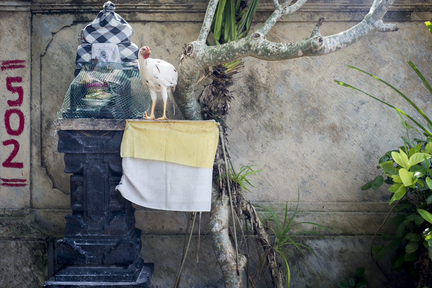 Love the rural side of Bali.
