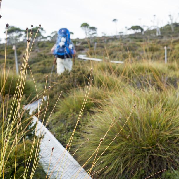Tasmania2013-2815.jpg