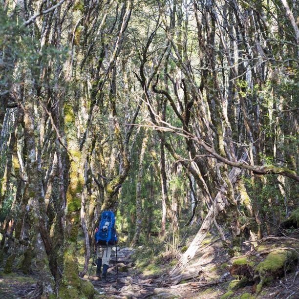 Tasmania2013-3024.jpg