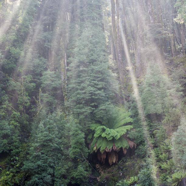 Tasmania2013-3180.jpg