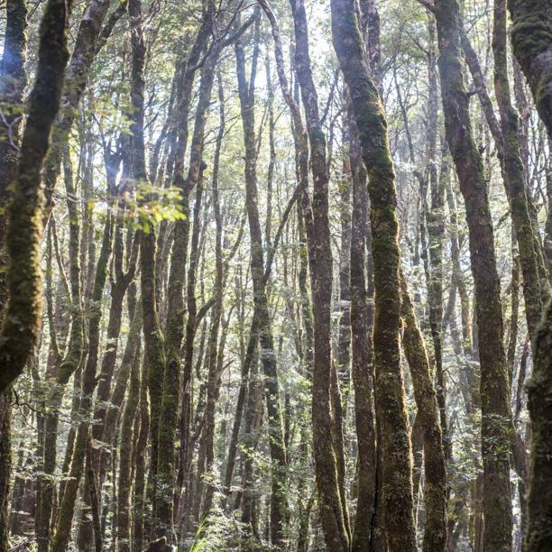 Tasmania2013-3184.jpg